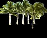 NLD I Sea You Palm tree (2).png
