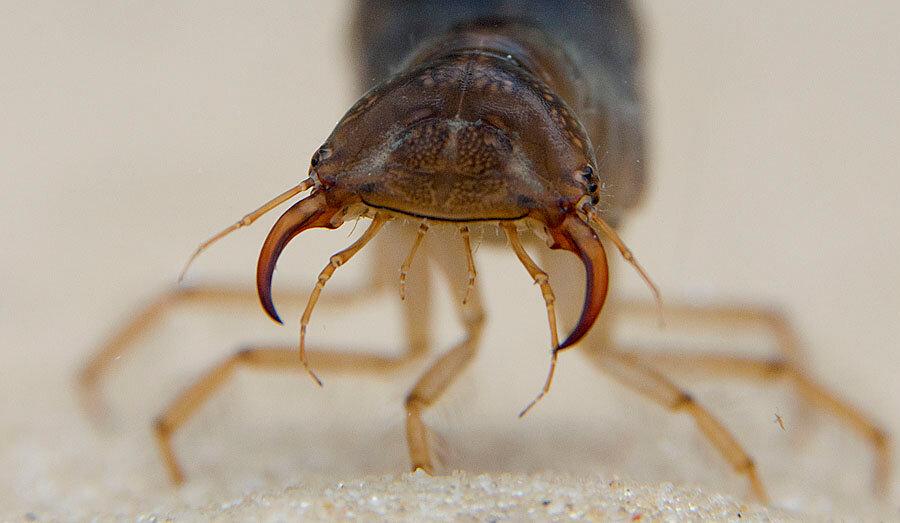 смотреть фото жуков