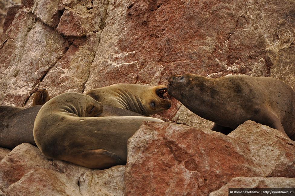 0 161747 d16e1ef3 orig Национальный парк Паракас и острова Бальестас в Перу