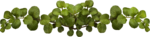 MRD_RT_green leaves.png