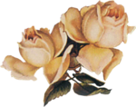 «Rose Wedding»  0_85635_81fbb713_S