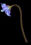 «La_magie_des_fleurs» 0_86273_e869c1d7_S