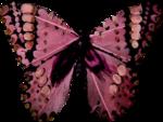 «A butterfly is a flying flower»  0_86b0f_ddde9d67_S