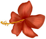 ddhibiscus.png