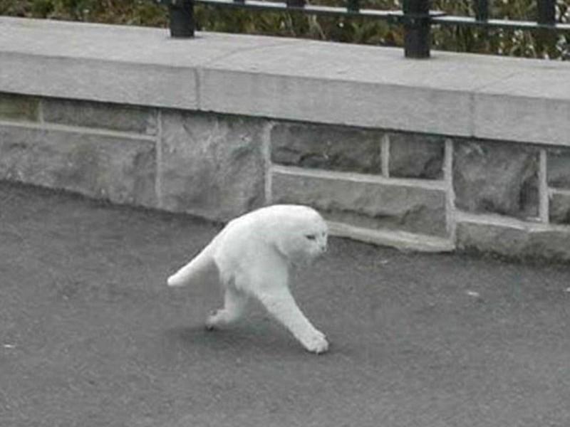 22. Двухлапая кошка.