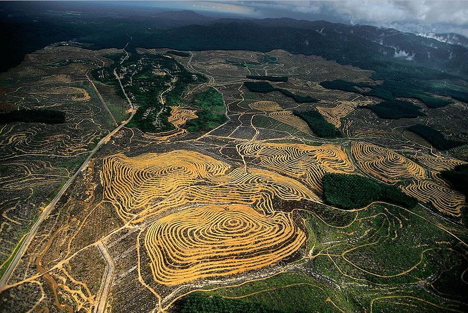 36. Пальмовые плантации в Малайзии.