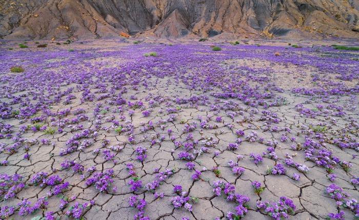 Чилийская пустыня Атакама несказанно удивила