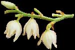 Весенний цветок