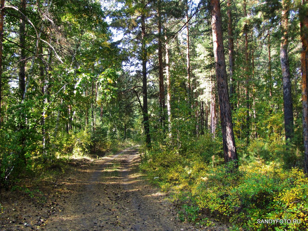 Цвета осеннего леса в Троицке #1