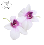 MR_White Orchids.png