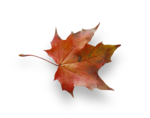 natali_autumn11_leaf2-sh.png
