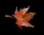 natali_autumn11_leaf2-sh.png