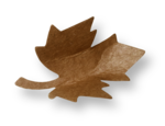 natali_autumn11_leaf8-sh.png