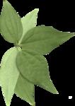 leafcluster.png