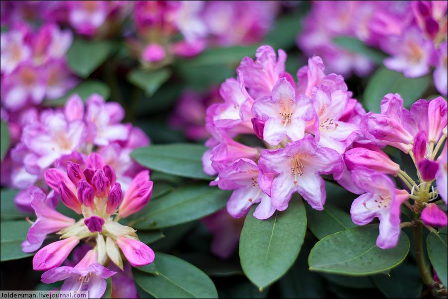 цветы во Франции