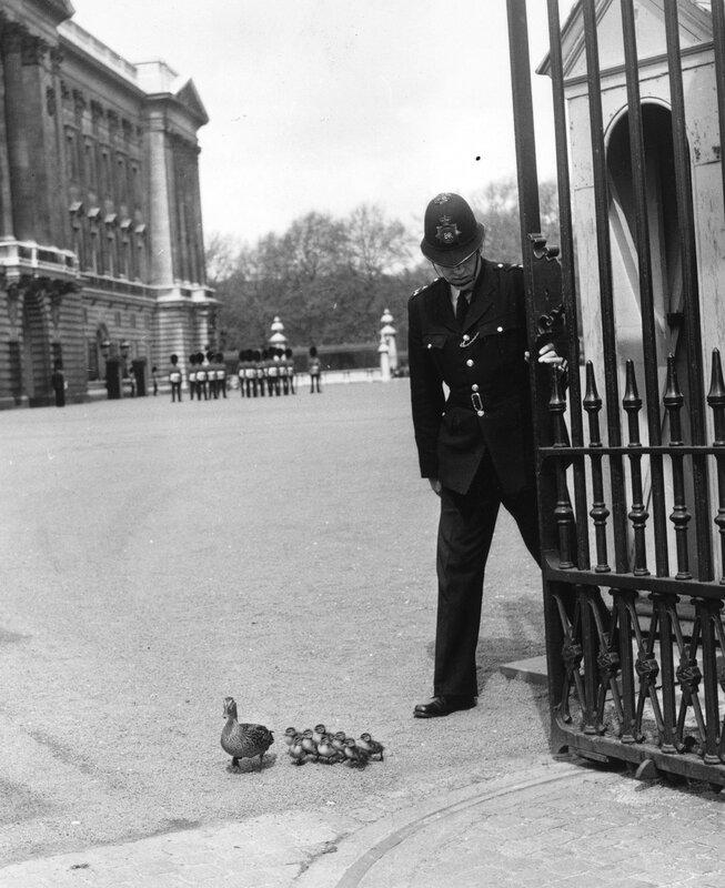 Palace Ducks