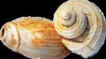 ldavi-littlefishiisland-shell10.png