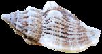 sekadadesigns_seavoices_element(10).png