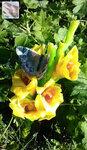 Бабочка на цветке_Максимова Ольга