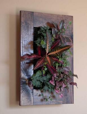 Зеленая стена из растений в квартире своими руками 171