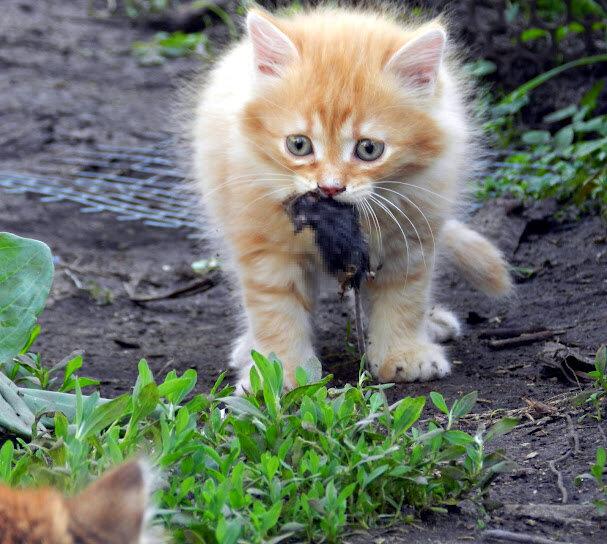 Кошки -Мышки + Тёма