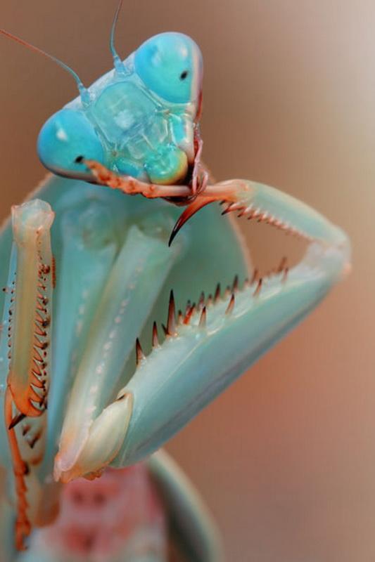 Завораживающие насекомые от Игоря Сивановича