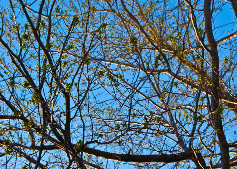 В ветвях