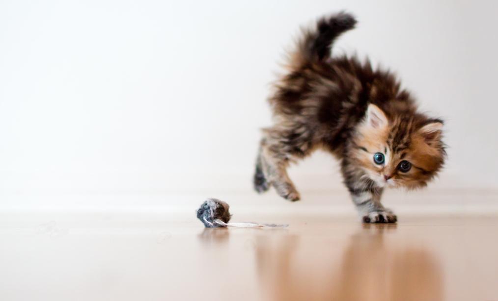 Фотосессия маленького котенка (40 фото)
