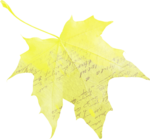 natali_autumn11_brush_leaf1b.png
