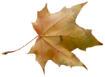 natali_autumn11_leaf1.png