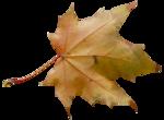 natali_autumn11_leaf1.png