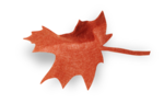 natali_autumn11_leaf7-sh.png