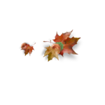 natali_autumn11_overlays4c.png