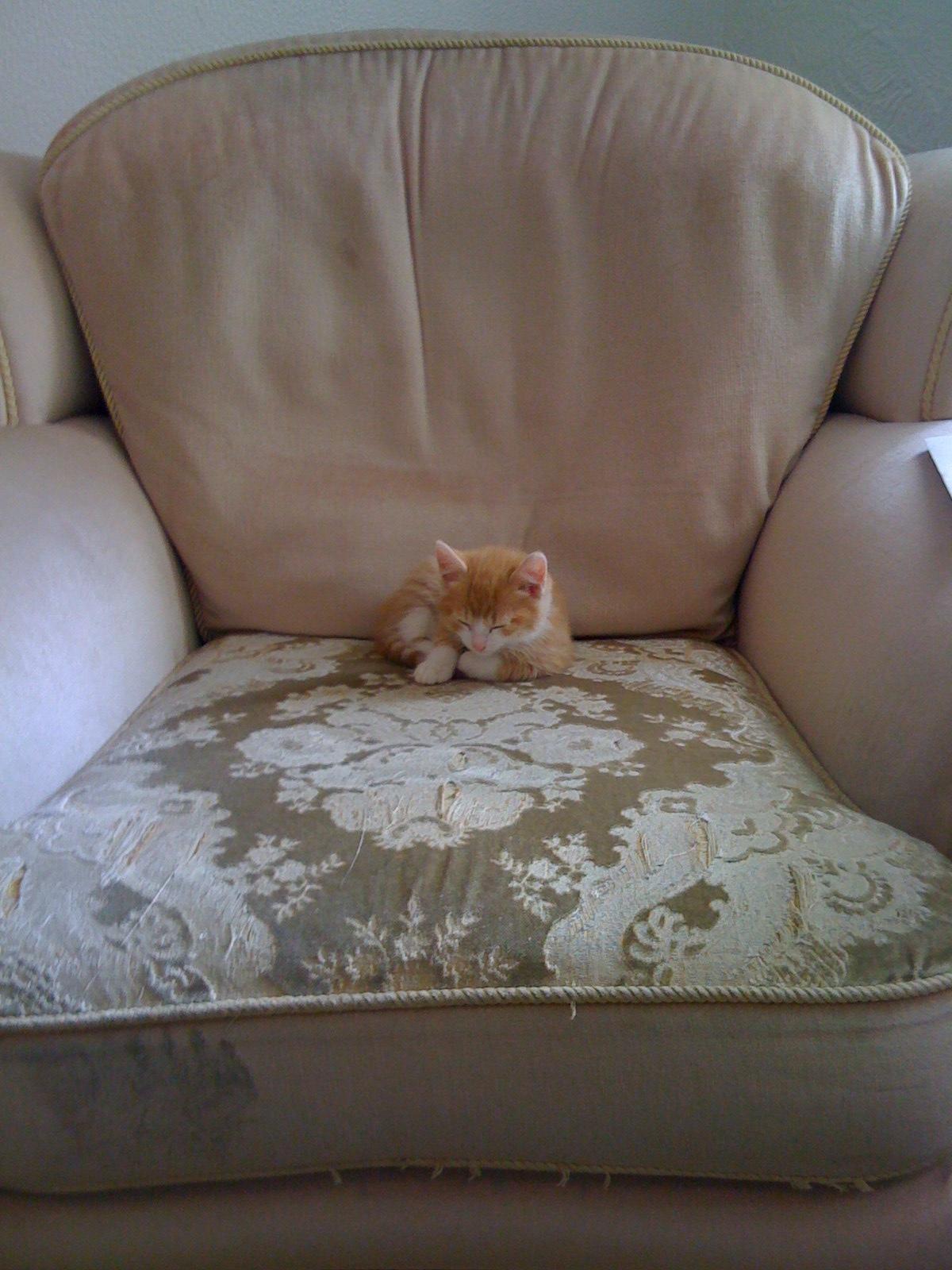 Маленький котенок в большом кресле фото 5