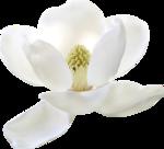 MRD_SeaMemories_white flower.png