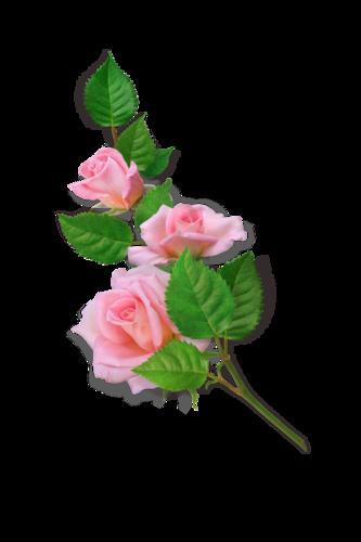 Как в вставить цветы