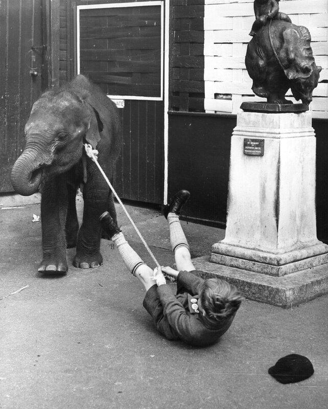 Stubborn Elephant