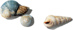 ldavi-littlefishiisland-shell3.png