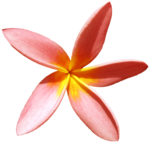 feli_syd_flower.png