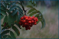 http://img-fotki.yandex.ru/get/6310/15842935.18c/0_d5e0b_3757c4e5_orig.jpg