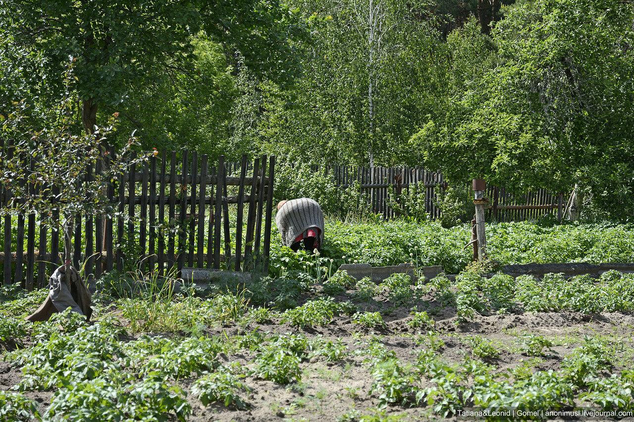 Огородное