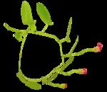 «whitebell flowers»  0_879b8_ef1d491c_S