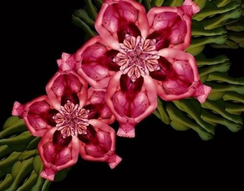 Цветы из человеческих тел Сесилии Уэббер