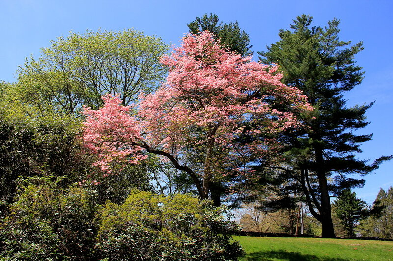 Краски весны.