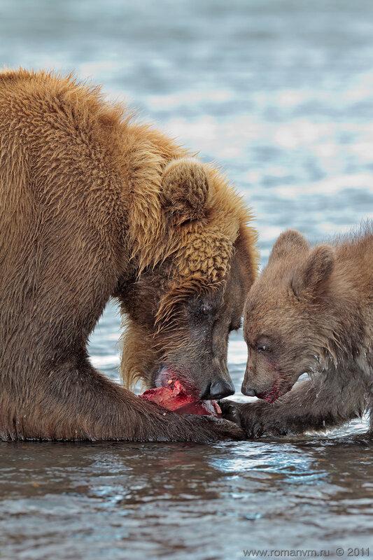 Мама, а мне дай укусить!