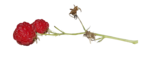 natali_autumn11_redberry1.png