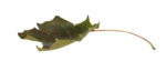 natali_autumn11_leaf4.png