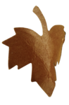 natali_autumn11_leaf11.png