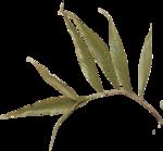 etc_dan_ssbeach_Leaf Branch2.png