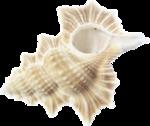 MRD_SeaMemories_sea shell.png